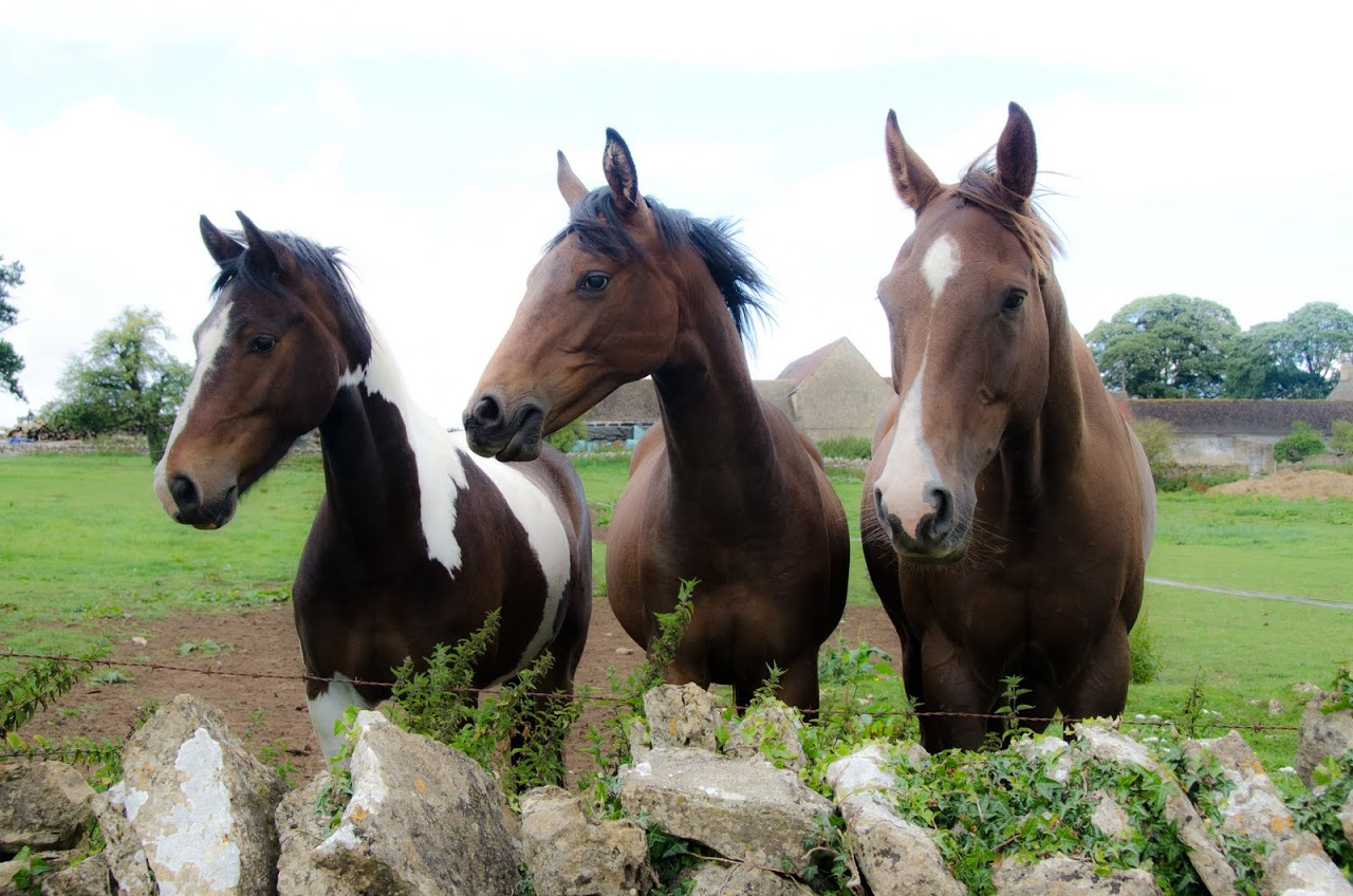 Horses in the Cotswolds