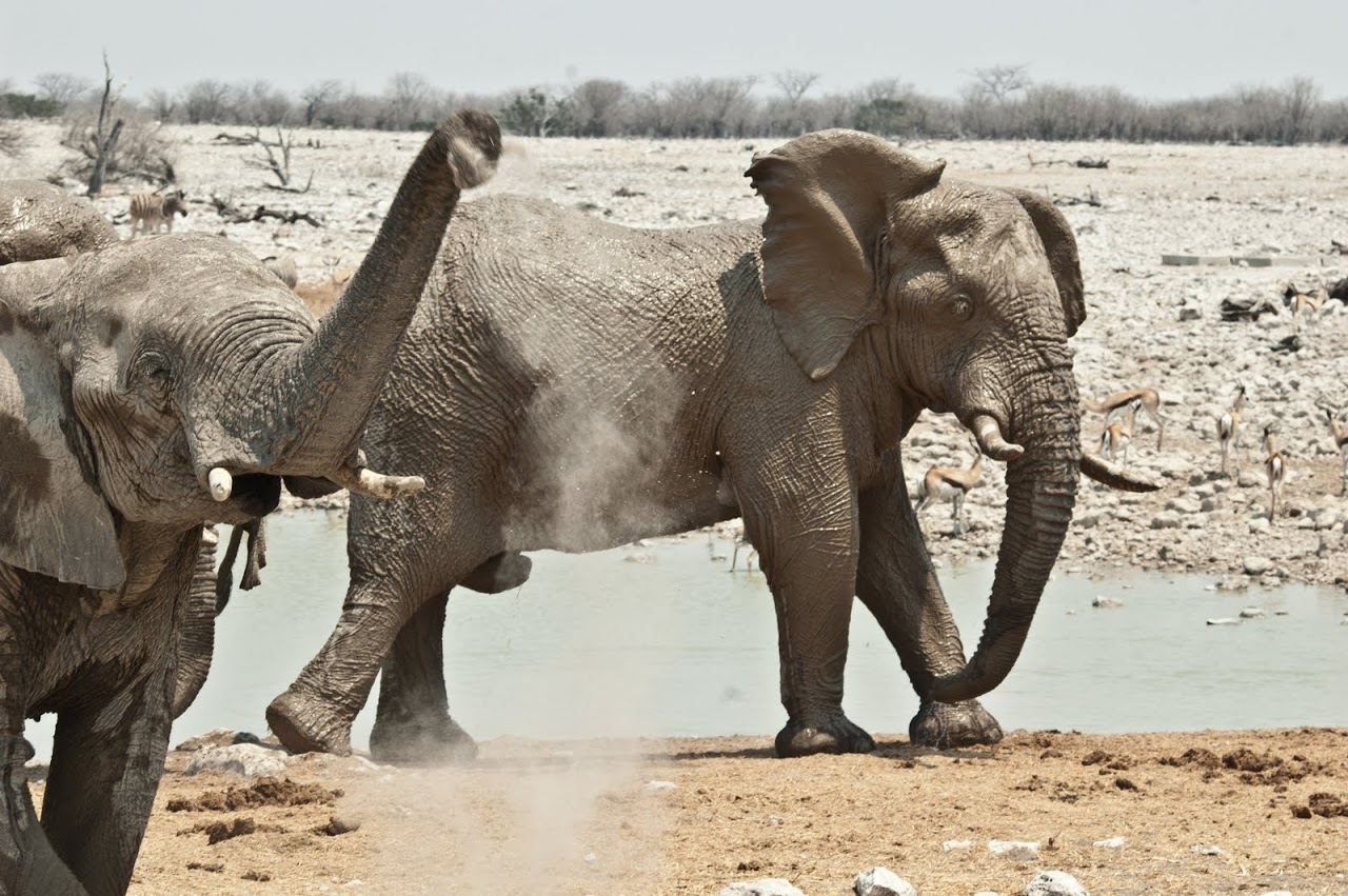 Elephants at watering hole