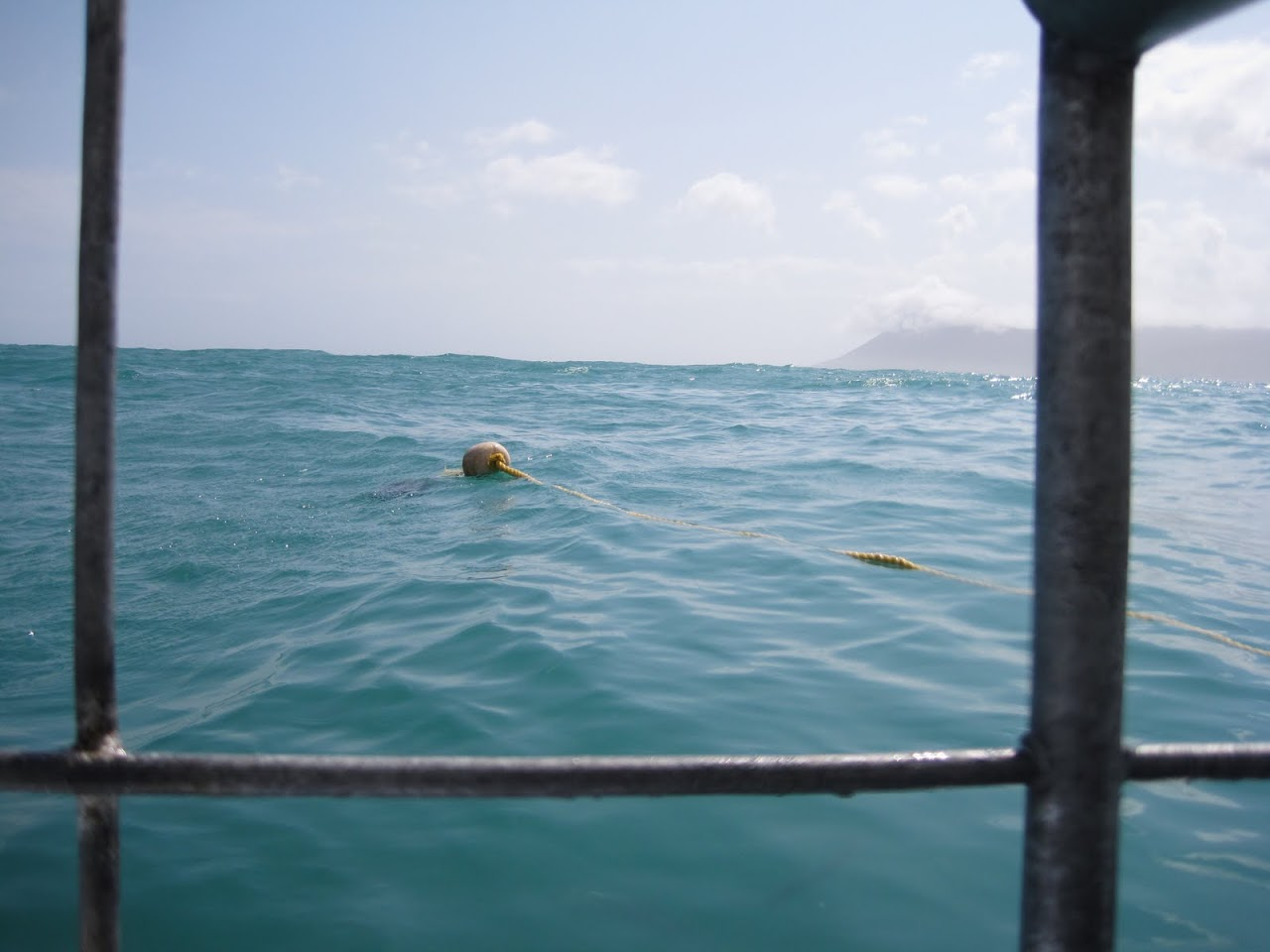 View from shark diving cage