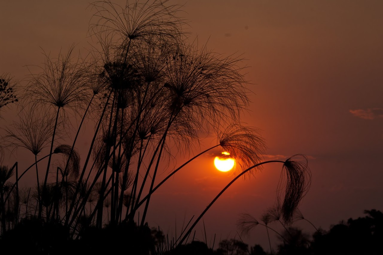 Sunset at Okavango